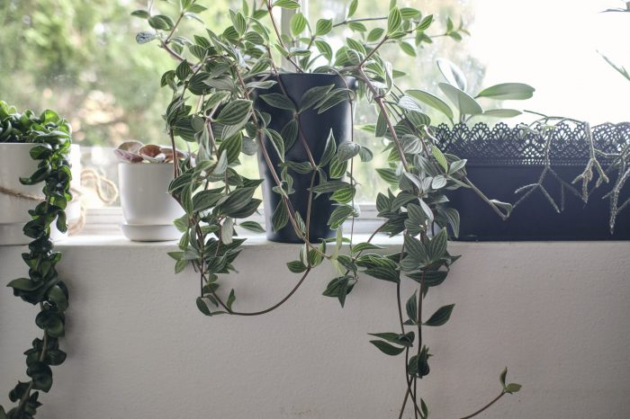 Indoor plant guide for Oatley, St George, Sydney