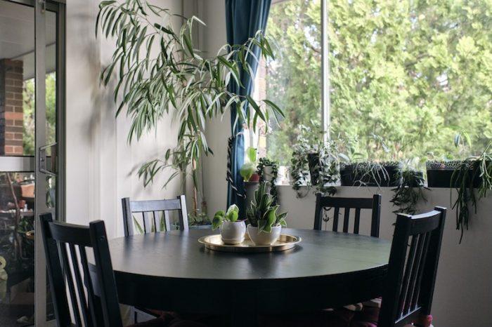 Indoor plant guide Oatley, Sydney