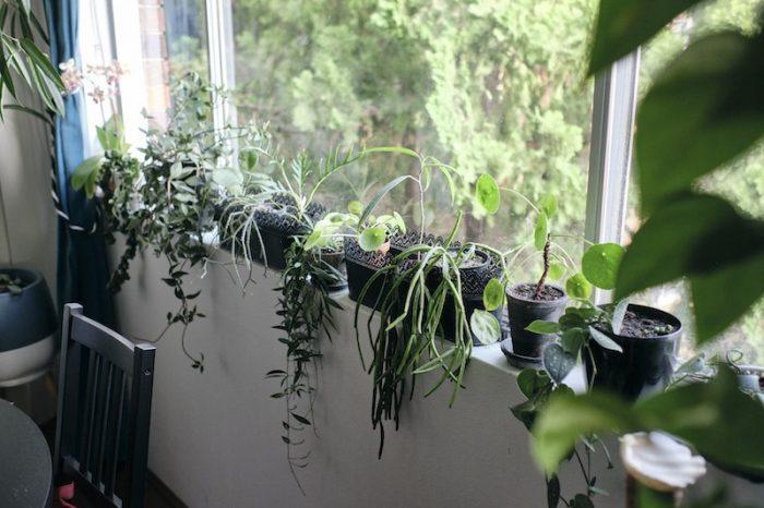 Oatley indoor plants Sydney