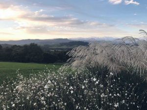 The garden social, landscape designer, Sydney